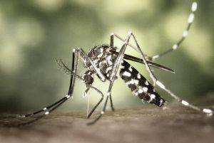 Dengue puerto vallarta